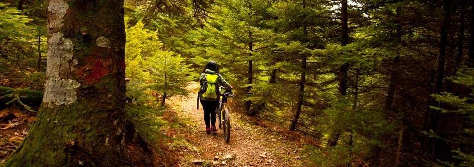 Δάσος Στενής (Δίρφυς) - Εύβοια